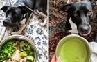 Dit meisje geeft haar hond 100% veganistische gerechten: