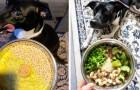 Una ragazza fa seguire alla sua cagnolina una dieta vegana e consiglia a tutti di fare lo stesso