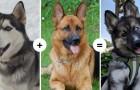 15 cani dalle caratteristiche affascinanti e insolite mostrano il risultato dell'unione di geni diversi