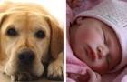 Una donna incinta chiede a una sua amica di cambiare nome al cane: