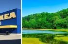 Ikea compra 4.500 ettari di foreste negli Usa per proteggerle e impedirne lo sfruttamento intensivo