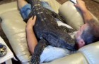 No lograras creer que alguno pueda tener un animal de este tipo en su casa...