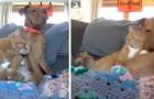 Il gatto conforta il cane ansioso mentre la padrona è fuori casa: una telecamera mostra la tenera scena