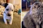 15 foto che dimostrano quanto i nostri animali domestici siano la medicina ad ogni malumore