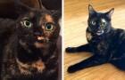 Va all'univesità e chiede ai genitori di badare al suo gatto: loro lo danno via senza dirgli nulla