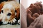 Eine schwangere Frau bittet ihre Freundin darum, den Namen ihres Hundes zu ändern, weil es der gleiche Name ist, den sie für ihre Tochter gewählt hat