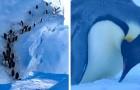 Une équipe de tournage voit des pingouins en danger de mort et décide de les aider même si c'est contraire aux règles
