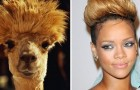 15 divertenti foto di animali che assomigliano incredibilmente a delle celebrità