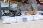Questo negozio lascia un materasso fuori dalla porta tutte le notti: i cani randagi ora hanno un posto dove dormire