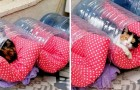 Ze bouwen warme huizen voor zwerfkatten met plastic flessen en dekens - een idee om te imiteren