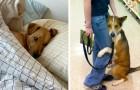 Vierpotige engelen: 15 honden die de titel van beste vriend van de mens hebben verdiend