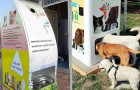 Questi speciali distributori offrono cibo agli animali randagi in cambio di bottiglie di plastica da riciclare