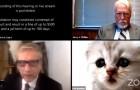 Un avvocato si presenta all'udienza su Zoom con un filtro a forma di gattino sul viso: il video è esilarante