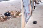 Een robotstofzuiger ontsnapt uit de winkel en maakt de stoepen van de stad schoon: de video is surrealistisch