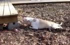 Een vrouw vindt een verlamde hond en besluit een ONMOGELIJKE ingreep te doen