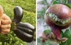 Wenn die Natur zum Leben erwacht: 20 Beispiele für Gemüse und Früchte mit bizarren und fast menschlichen Formen