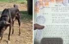 Un agricoltore esclude i figli dal testamento e lascia tutto al suo cane, l'unico a non averlo mai deluso
