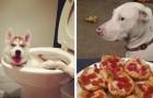 16 perros incorregibles frente a los cuales es prácticamente imposible enojarse