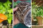 Niente più pollice nero: vi sveliamo gli errori più comuni da evitare quando si coltivano le piante