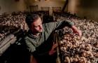 Parigi: i parcheggi sotterranei diventano coltivazioni di funghi