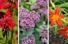 8 piante resistenti e a bassa manutenzione, perfette per avere un giardino splendido senza fatica