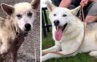 Divorzia dalla moglie e si vendica sul cane di lei lasciandolo senza cibo: i volontari lo salvano