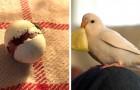 Un uomo trova un minuscolo uovo e decide di