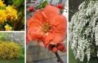 Décorez votre jardin de façon élégante avec ces 8 plantes faciles à cultiver