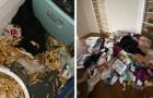 De verhuurder toont met foto's de schade die de huurders in slechts 6 maanden hebben aangericht