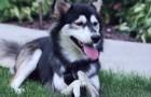 Eles decidem ajudar um cão sem esperança: o resultado final é surpreendente