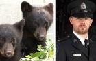Sie suspendieren einen Agenten, weil er sich weigert, zwei kleine Bären zu töten: Er hat gegen die Anweisungen verstoßen, die er erhalten hat