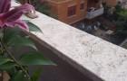 Balcons, rebords en marbre : retrouvez-les comme neufs avec ces astuces simples et économiques