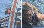Un marinaio si tuffa in mare e salva quattro gatti in pericolo sopra una nave in fiamme
