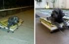 Han bygger en vagn på hjul för att ta sin gamla hund på promenad eftersom den inte kan röra sina baktassar