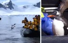 Vidéos de Pingouins