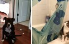 16 fun photos of animals who have made a mess and show no remorse