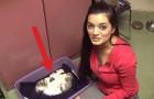 Mettono un cane in una cucciolata di gatti. La reazione della mamma? Wow.