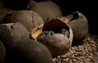 Die Überreste eines Dinosauriers, der auf einem Nest sitzt, wurden zum ersten Mal entdeckt: Er beschützte seine Jungen