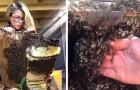 Elle déplace une ruche entière à mains nues : la fascinante vidéo de la femme qui murmure à l'oreille des abeilles