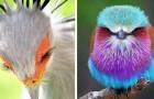 15 foto di uccelli così affascinanti e particolari che sembrano provenire da un altro pianeta