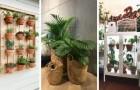 Porta un tocco di verde in ogni stanza inserendo le piante nell'arredo di casa: gli spunti migliori