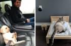 15 adorabili foto mostrano cosa le persone siano disposte a fare per il loro animale domestico