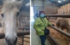 A 71-year-old woman asks for help to save her two elderly horses from slaughter