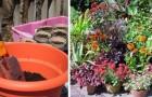 Le dritte più utili per interrare con successo le piante nei vasi o nelle fioriere