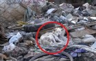 A transformação deste cão que estava morrendo em um aterro sanitário é impressionante