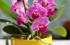 Les bonnes astuces pour arroser les orchidées et être sûrs d'avoir des fleurs spectaculaires
