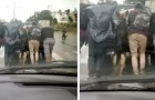 Een Duitse herder stapt uit de kapotte auto van zijn eigenaar en helpt hem samen met de andere mensen te duwen