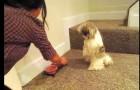 Cãozinho que só pode comer depois que fizer um truque.