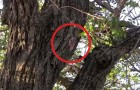 They find a baby squirrel on a tree: here's how they save it's life