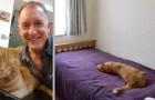 Il recherche une maison sur le web et découvre son chat sur la photo d'une maison à vendre